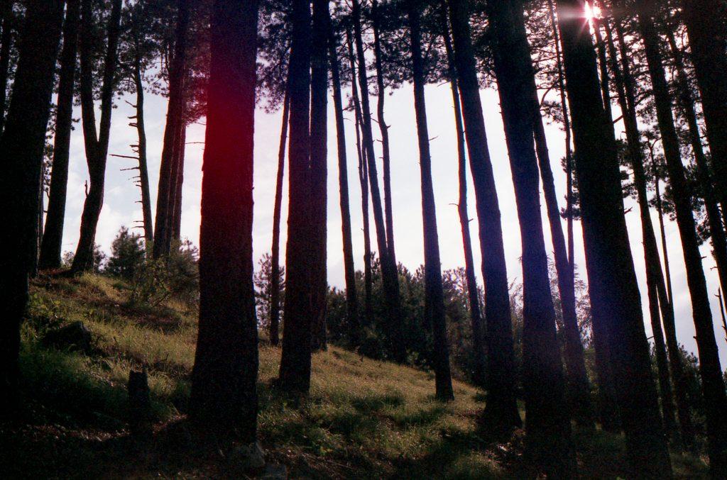 Couleurs en forêt